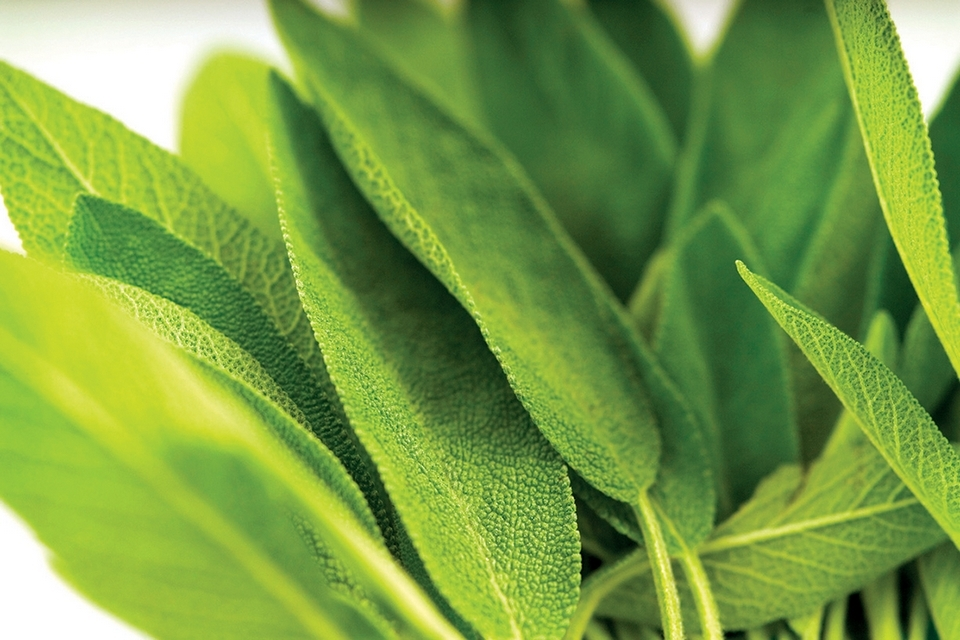 Sage has a long history of medicinal and culinary uses.