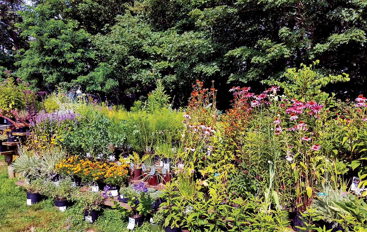 <b></b> Perennial Harmony Garden & Landscape is located at 144 Boston Post Road, East Lyme. (Toni Leland photo)
