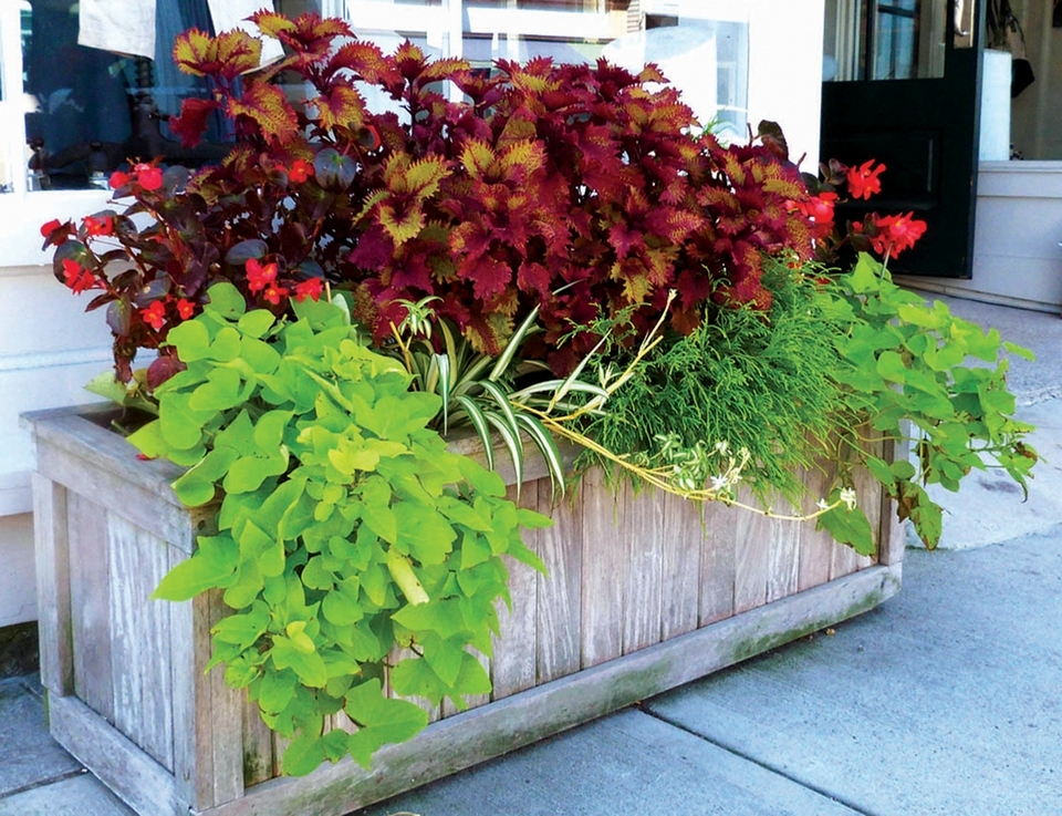 Mystic Garden Club volunteers maintain numerous planting boxes in downtown Mystic. (Toni Leland photo)